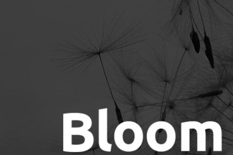 Bloom and Boom